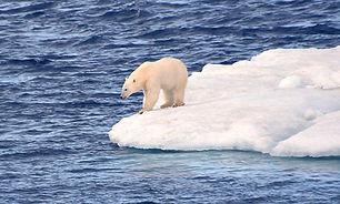 北极团1.jpg