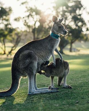 australia-1180394_1280.jpg