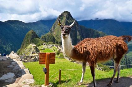 Machu Picchu (60).jpg