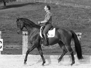 Pferdegerecht ausbilden