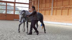 """""""Wege zum Geraderichten"""" Ein Artikel aus dem Pferdemagazin Passion 4/2018 erschienen am 07"""