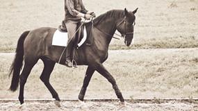 Zum Thema: Gehfreude des Pferdes