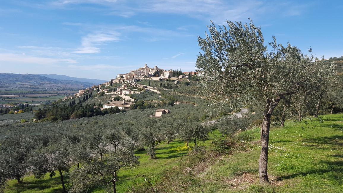 Trevi - A Source of Bonacci EVOO