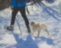 snowshoeing.jpg