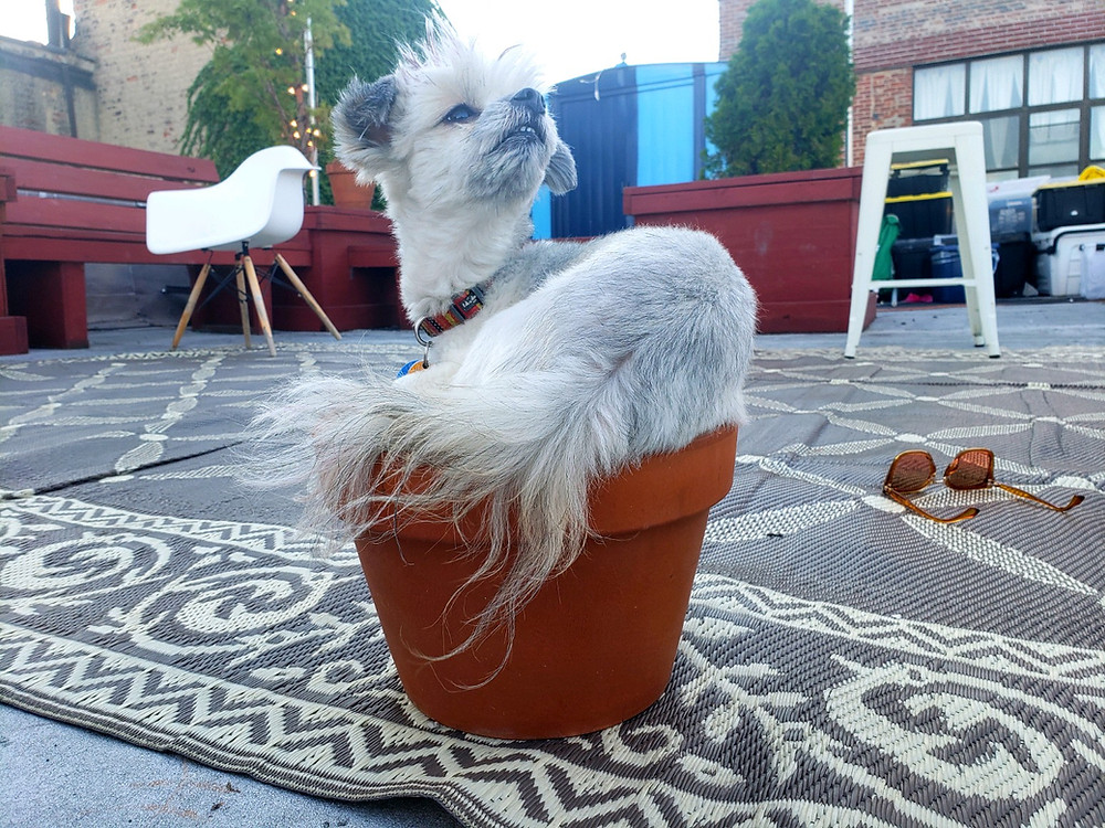 Dog social distancing