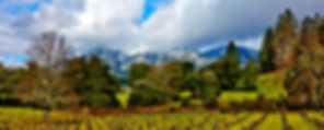 1-vineyards-and-mt-st-helena-garry-gay.j