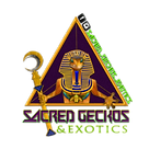 sacredgeckos logo sticker green
