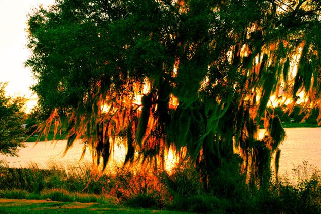 Florida Sunsets ii