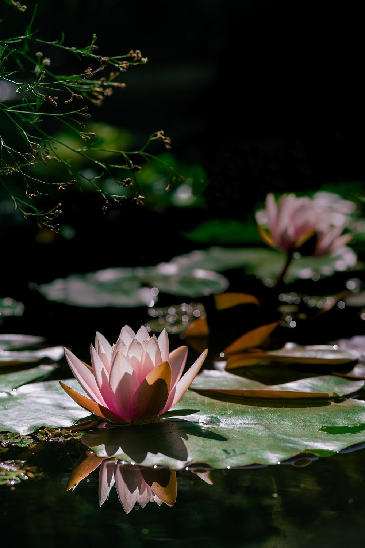 Pablo Saccinto Photography - Botanical Garden