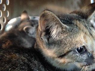 TNR Saves Cats!