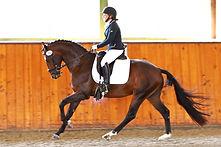 O' Pierre, 2015 Stallion Inspection, pho