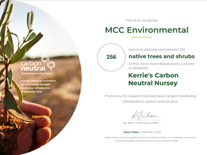 Our Carbon Neutral Christmas Trees