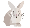 BunnyImage2.png
