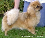 Tashi Gong Miss Finnland