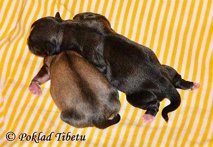 twins newborn.jpg