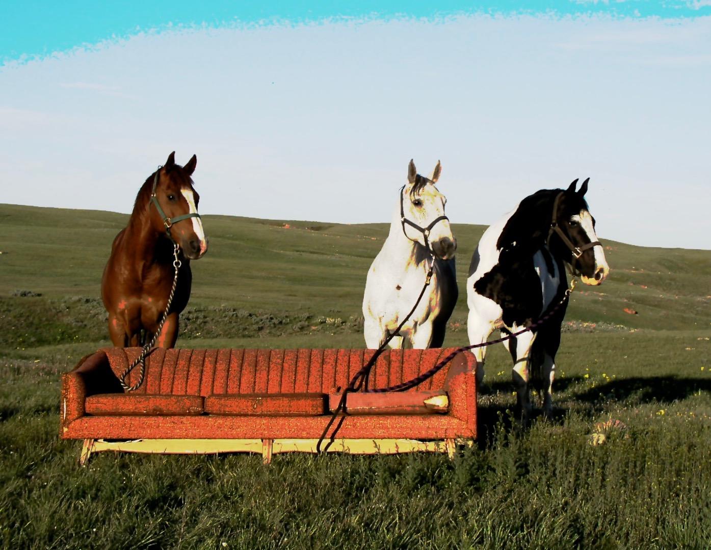 Horses Posing