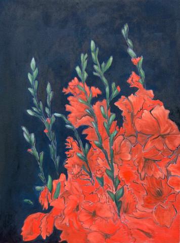 Red Gladiolus At Night