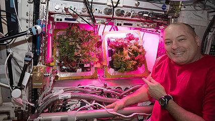Veggie_crew_member-NASA.jpg