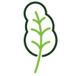 kale-icon-1.png