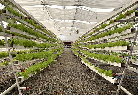 Soilless Farming: Different Methods to grow plant without soil