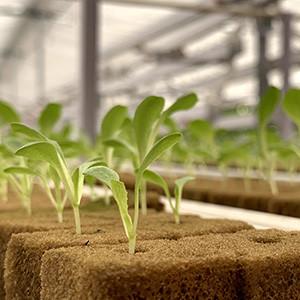 Hydroponic Vs Organic Farming