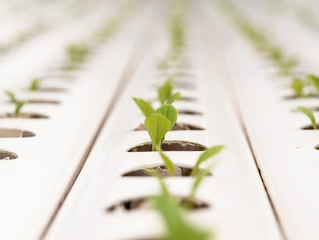 What are the crops suitable for hydroponics in India?