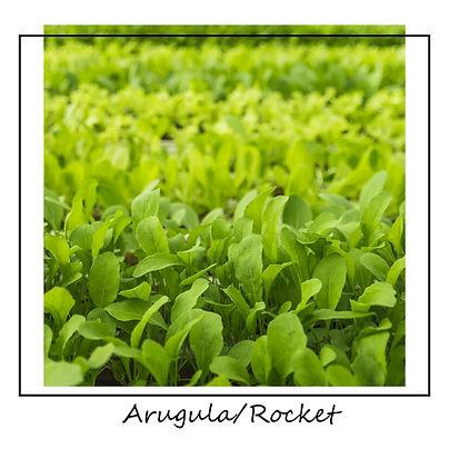 Arugula_Rocket.jpg