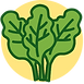 Kale-Icon.png