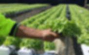 Kanera_agro_products_–_5,000_sqft_fully_
