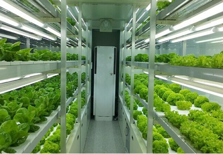 How to start Hydroponic farm business