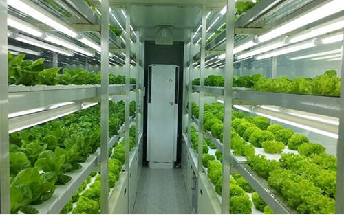 Indoor Hydroponic farm in controlled environment inside container developed by Barton Breeze