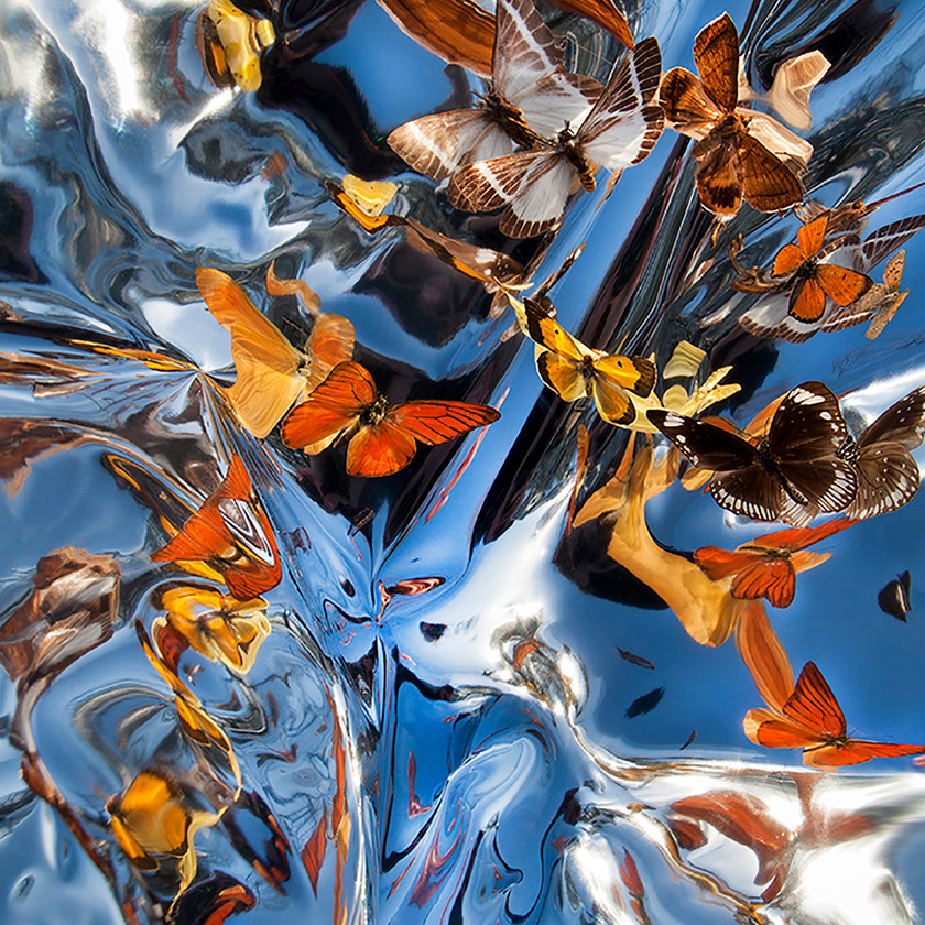 Kaleidoscopic Still Life