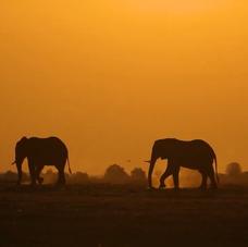 Sunset in the wilderness of Chobe, Botswana
