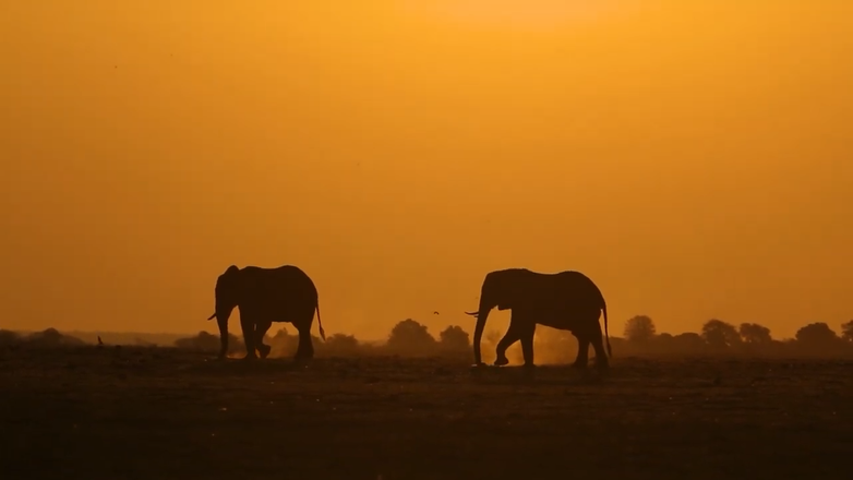 African Elephants in the Distance - The Chobe, Botswana