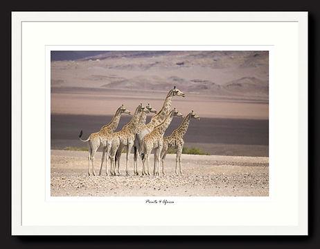 Prints for conservation 1