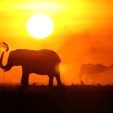 African Elephant & Sunset