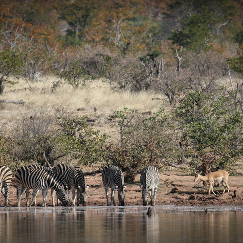 Active Water Hole, Botswana