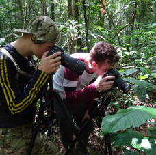Getting close to the famous Blunt Headed Tree Snake, Tambopata, Peru