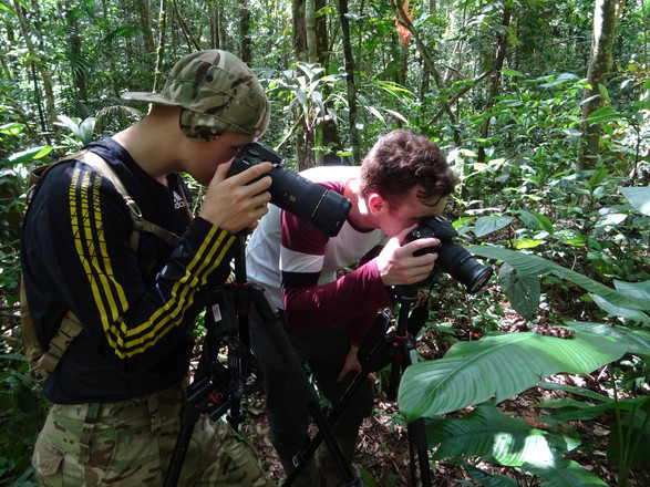 Photography in Action - Amazon Rainforest, Peru