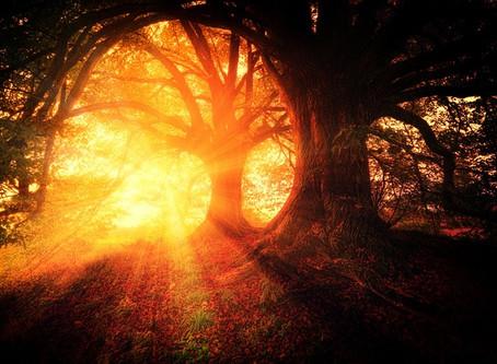 L'Esprit des Arbres: chêne et aulne
