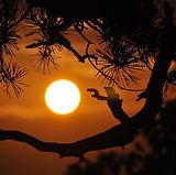sunset-396633_640.jpg Image par Iwona Ol
