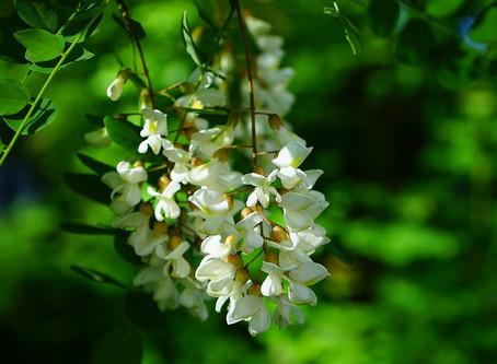 Parfum de fleur, parfum de vie