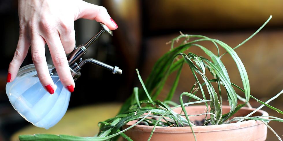 Atelier plante d'intérieur : Au secours je fais crever toutes mes plantes !