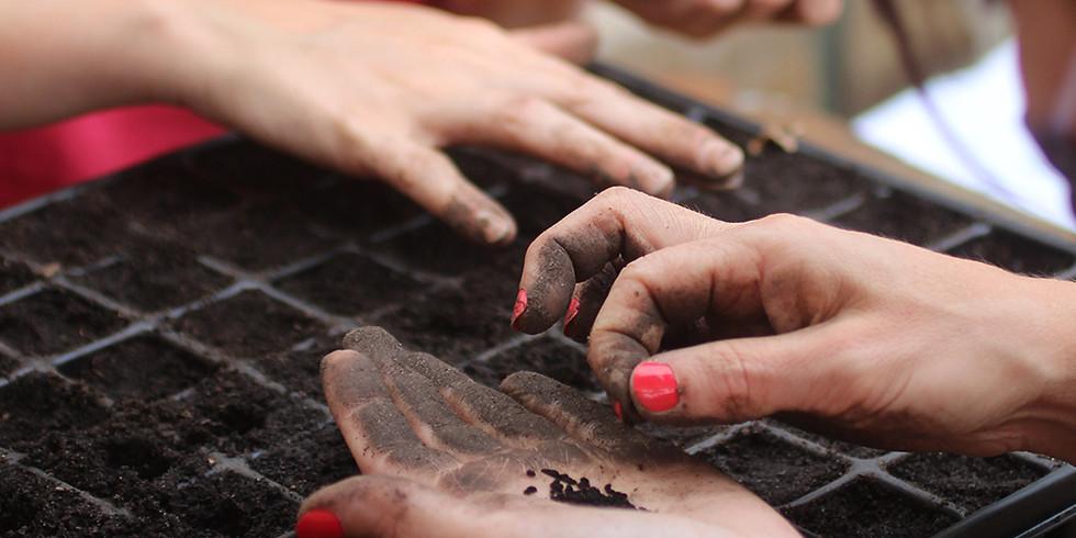 Atelier Pépinière : Bouture, semis... Tous les secrets sur la multiplication des plantes ! COMPLET