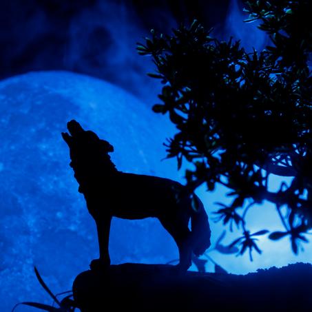 Fiction - Werewolves