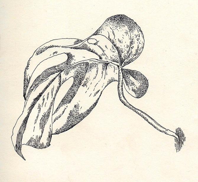 palm-leaf001WEB_670