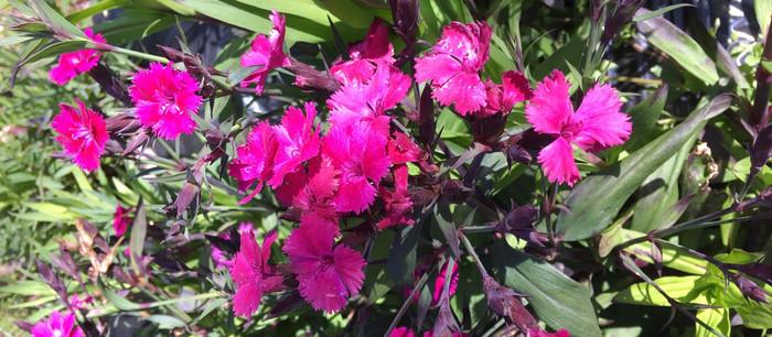 ロルカと花