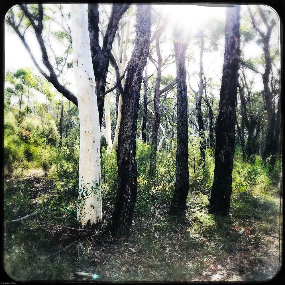Dharawal National Park trees