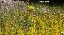 Recovering wildflower diversity