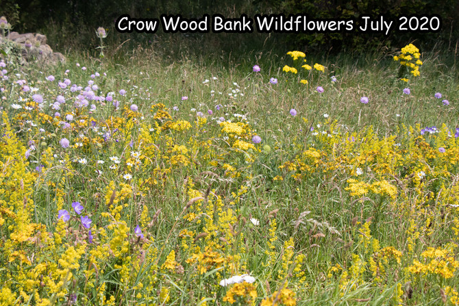 Crow Wood Bank Wildflowers Year by Year